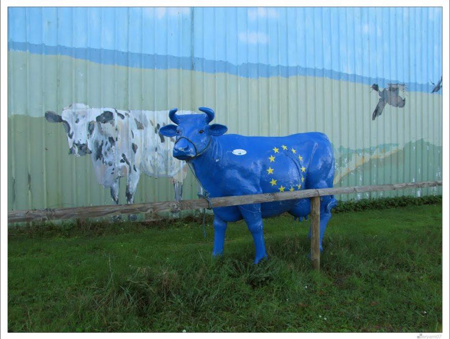 La collecte européenne de lait ne ralentit pas