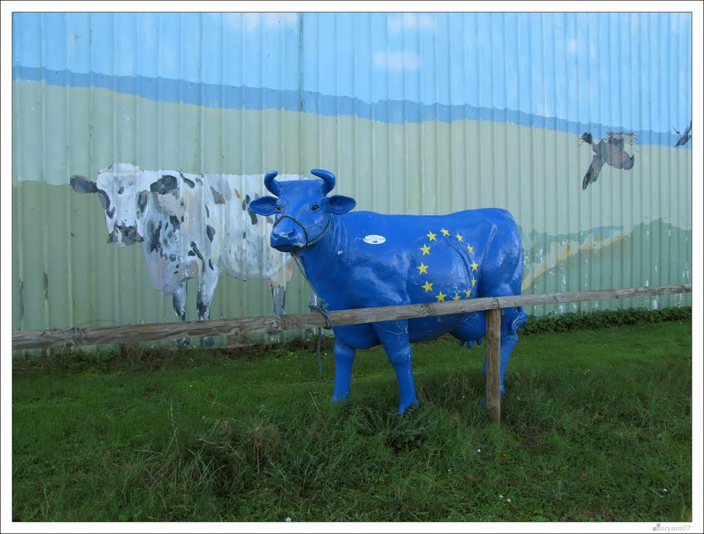 Vache peinte aux couleurs de l'Union Europeenne