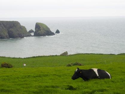 Les éleveurs laitiers irlandais en difficulté