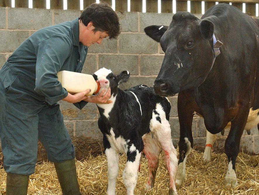 Baisse du nombre d'éleveurs laitiers de 3,4 % en 2017