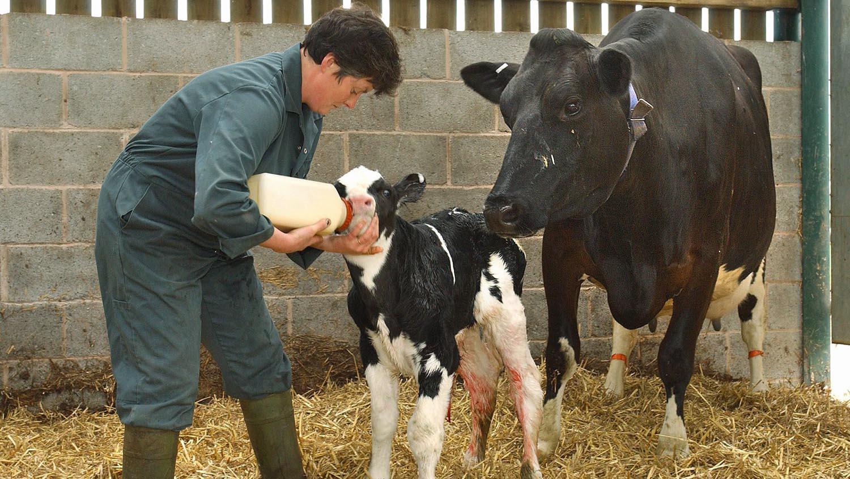 La baisse du nombre d'éleveurs laitiers a atteint 3,4 % en 2017.