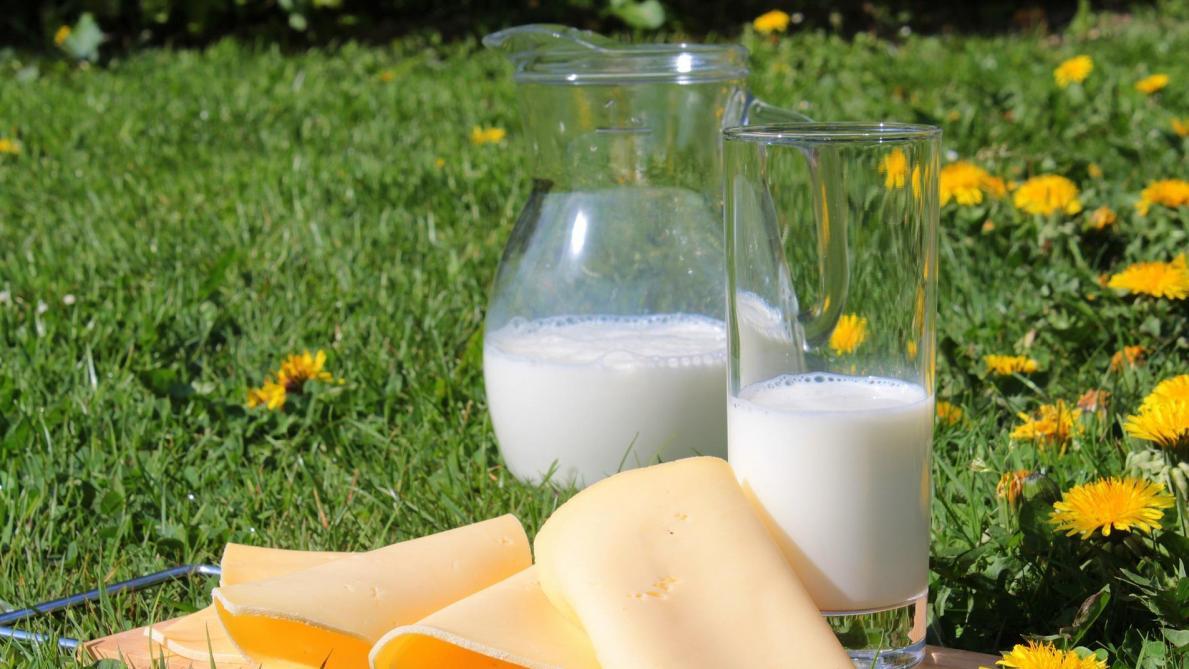 Pichet de lait et tranches de fromage sur fond de prairie
