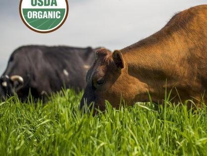 Moins de contraintes pour l'élevage bio aux EU