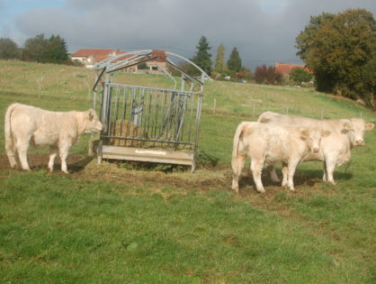 Le cheptel bovin se replie de 2,5 % sur un an