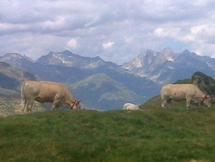 Terra Lacta va vendre du « lait de montagne » en Chine