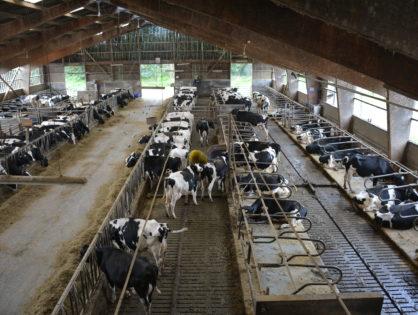 Bientôt moins de 100 000 exploitations bovines
