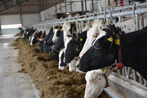 Relèvement des aides bovines 2020