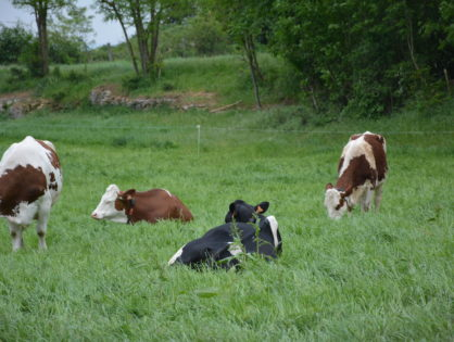 Carrefour encourage le lait bio
