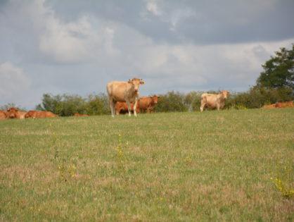Prairies sinistrées : les indemnisations arrivent