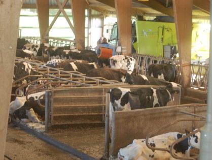 Comment géolocaliser ses vaches dans sa stabulation