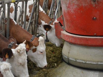 L'empreinte de la robotisation sur l'élevage