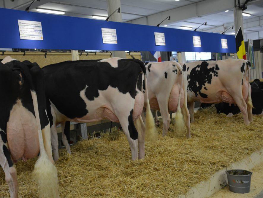 60 kilos de lait en plus en 2018