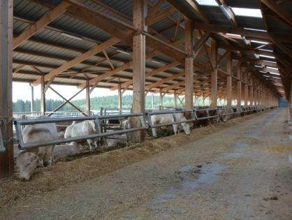Les bâtiments d'élevage toujours renouvelés