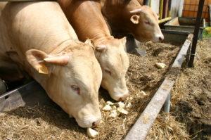 Hausse des prix des intrants en élevage