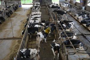 16 indicateurs de bien-être du troupeau laitier