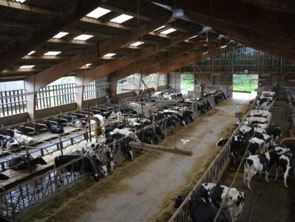 1 000 grands troupeaux de plus chaque année