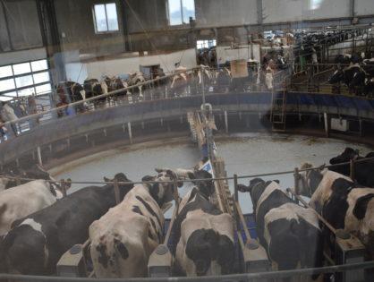 Le marché laitier en « équilibre »