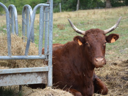 Année noire en bovin viande