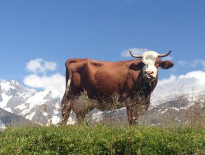 385 €/1000 l pour du lait de montagne