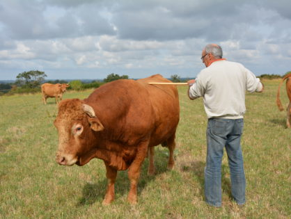 Un portail vers l'élevage herbivore
