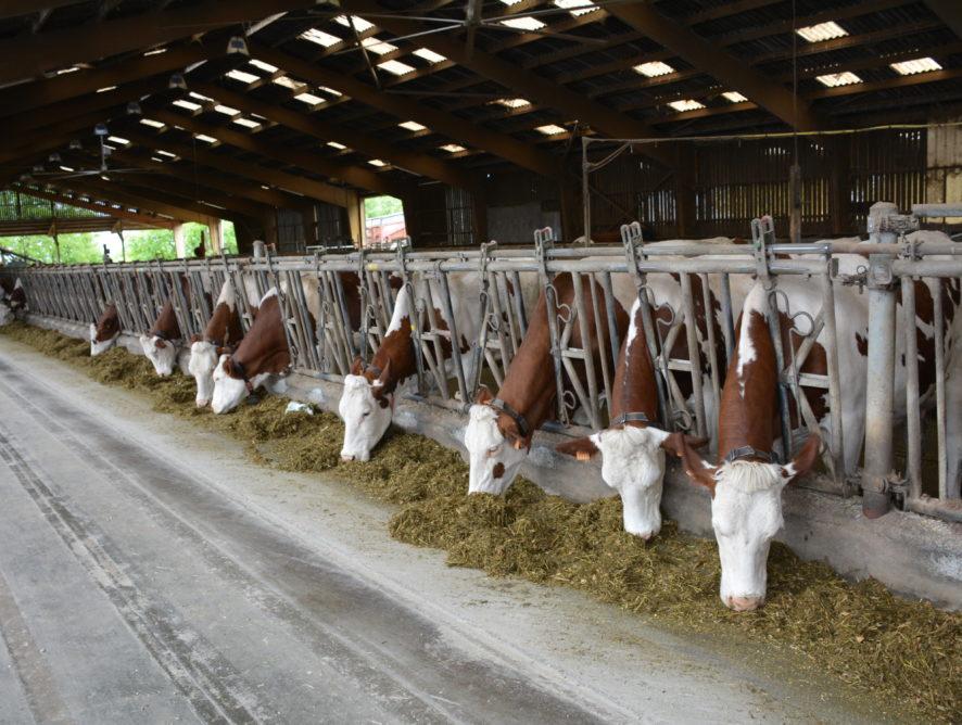 Le lait bio en quête d'avenir