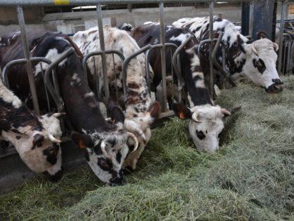 La filière lait réaffirme ses ambitions