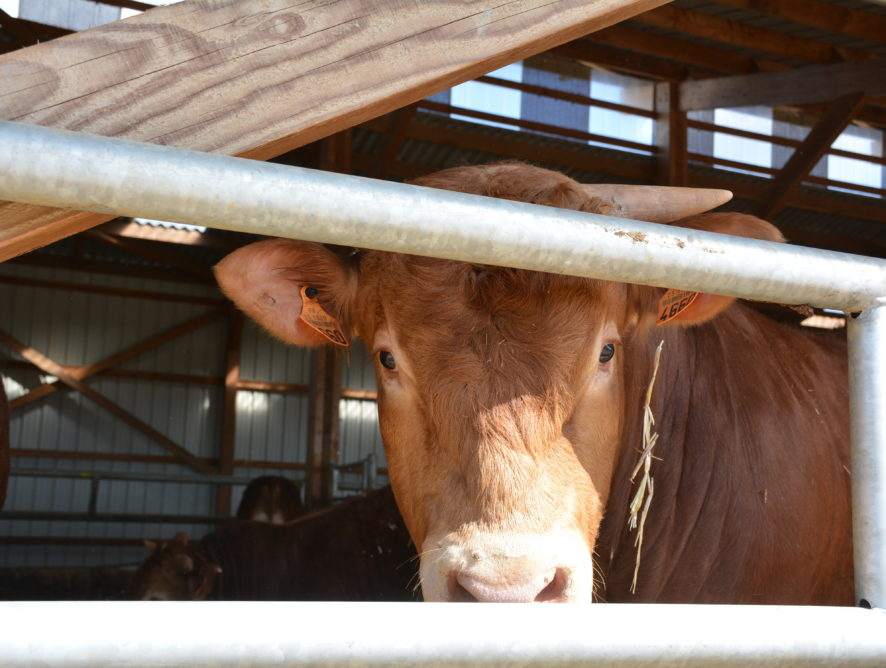 2,5% de bœuf en moins en 2020