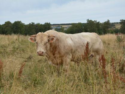 Gènes Diffusion agréée en Prim'Holstein