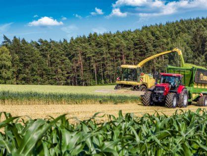 Net repli des surfaces de maïs