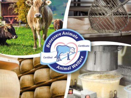 Parmesan : la carte du bien-être animal