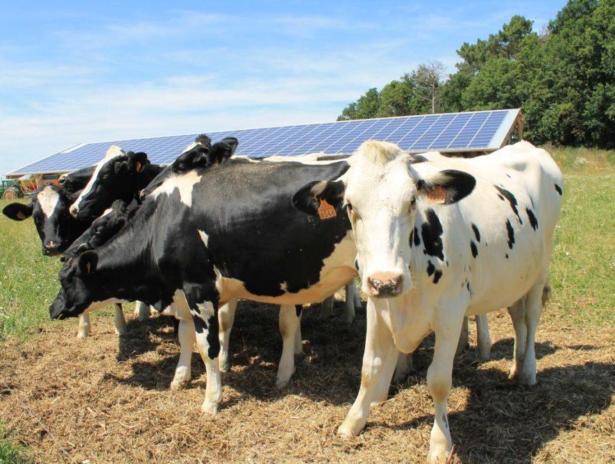 EDF cherche 15 000 ha pour des panneaux solaires